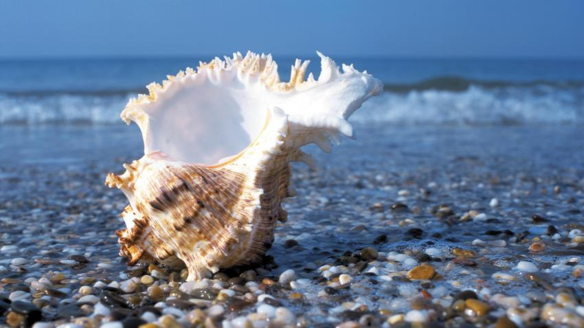 Shell, the Sea, Pebble.jpg